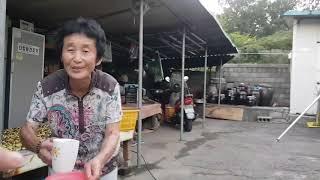 경기도 양주시 만송동 고인돌(거북바위) 답사