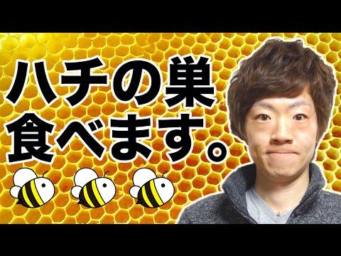 ハチの巣食べてみた。
