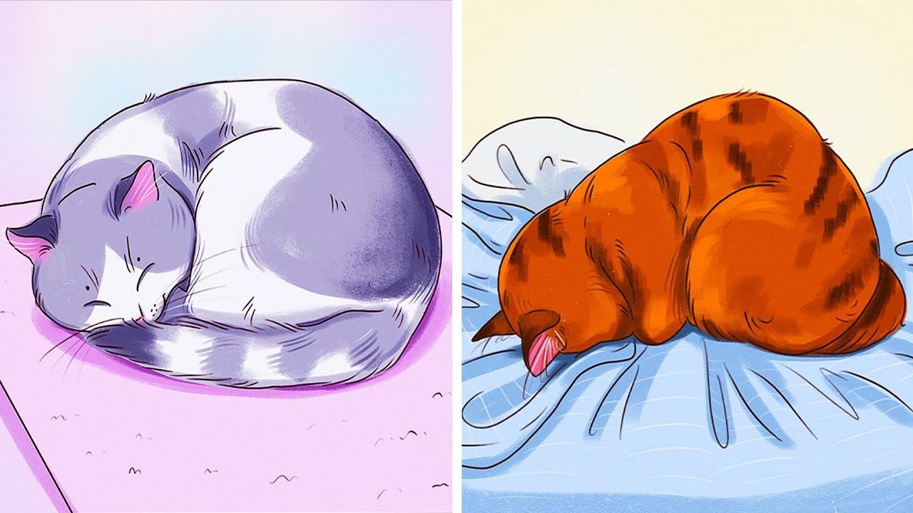 ท่านอนของแมวบ่งบอกอะไรเกี่ยวกับพวกมันได้บ้าง