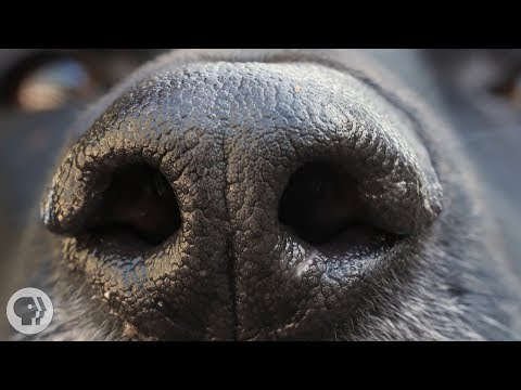 How Your Dog's Nose Knows So Much