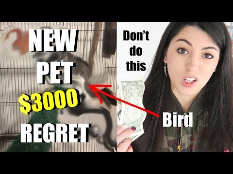 New Pet Bird | Don't Buy Wild Birds As Pets | Rescue Bird