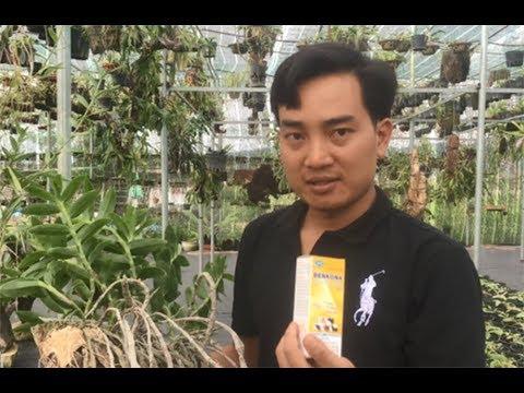 Download HoalanTV: Anh Nguyễn Ngọc Hà Chia Sẻ Toàn Bộ Về Phòng Và Trị Bệnh Cho Lan