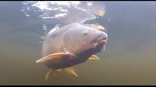[EPISODE] Fall Carp Fishing - Ontario