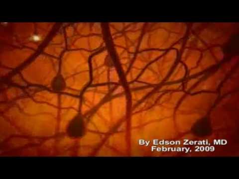 The Miracle in Human Brain (HD)