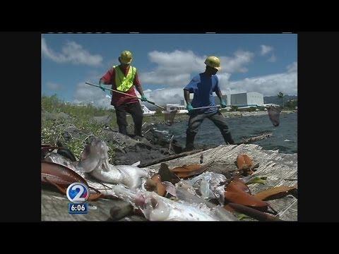 Matson could permanently halt molasses shipments following spill
