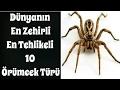 Sizi Öldürebilecek Dünyanın En Zehirli En Tehlikeli 10 Örümcek Türü