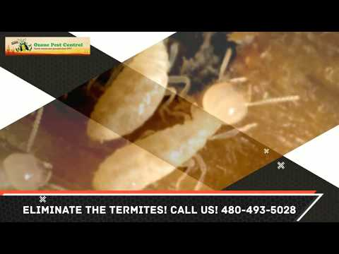 Termite Control Tempe AZ 480-493-5028 Ozone Pest Control