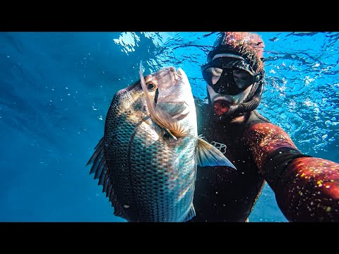 4 Tips On Spearfishing SNAPPER