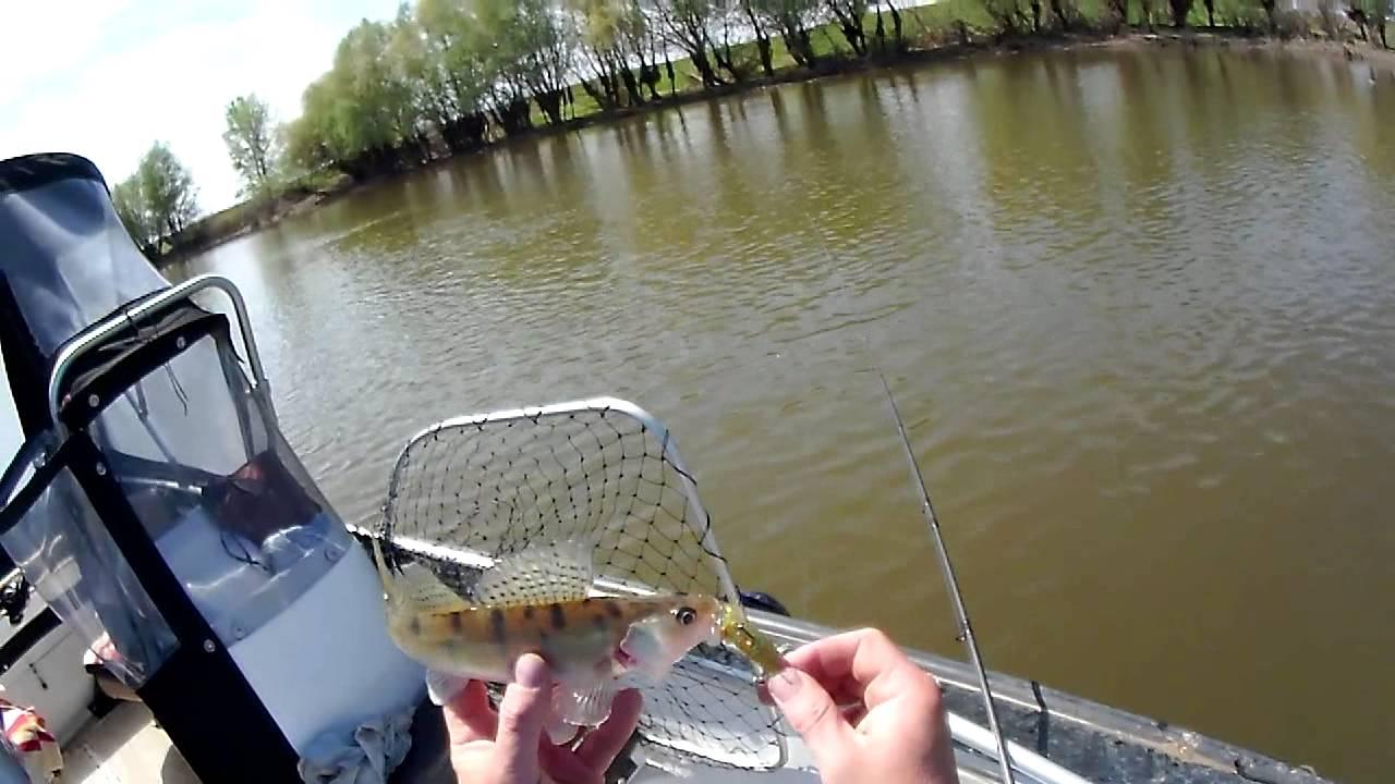 рыбалка лапас астрахань