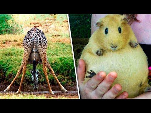 So sehen Tiere vor der Geburt aus