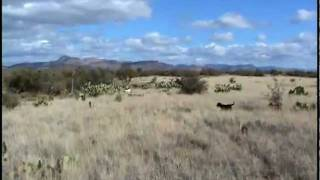 Arizona Quail Hunting - A Day On An Arizona Quail Hunt - Quail Dogs, Hunters, Coveys