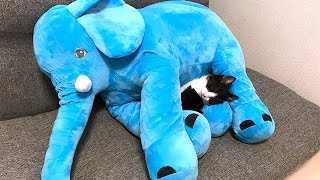 象とカレーパンマンと子猫