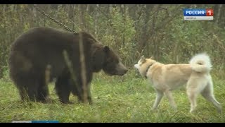 В Оршанском районе определили лучшие породы охотничьих собак  - Вести Марий Эл