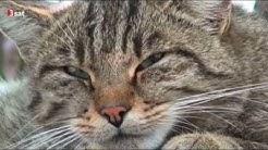 Wildkatzen keine Kuscheltiere