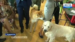 Редкие породы собак представили на международной выставке во Владивостоке