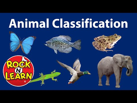 Animal Classification For Kids