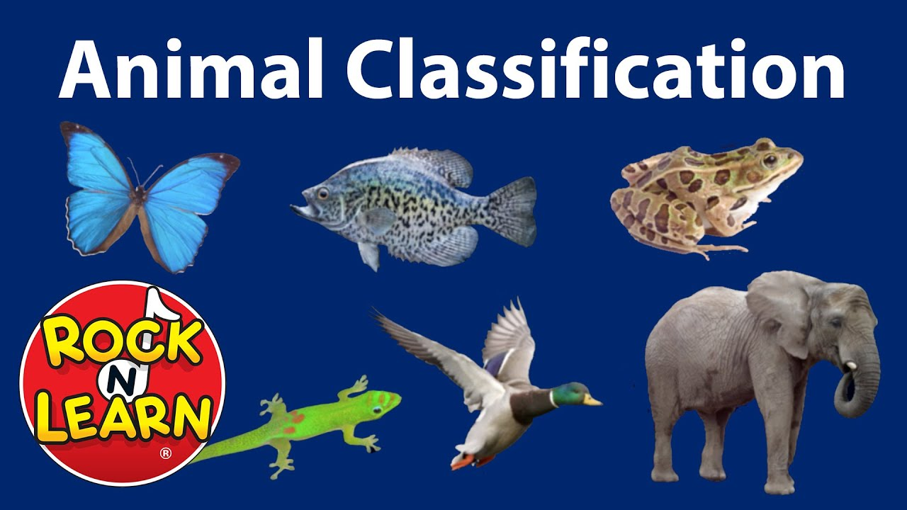 medium resolution of Animal Classification for Kids - YouTube
