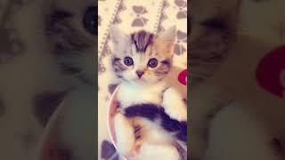 Kittens meowingCute Baby Cats