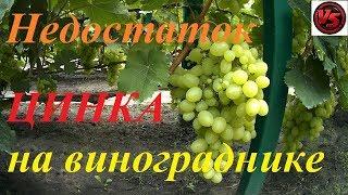 как Определить недостаток ЦИНКА на винограднике