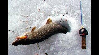 Все секреты ловли щуки на балансир зимой!