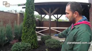 видео Озеленение участка