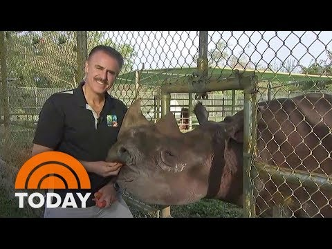 In Wake Of Hurricane Irma, Miami Zoo Animals Are OK (Including Rhino) | TODAY