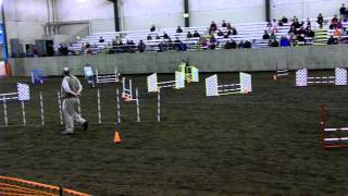 Wa State Qualified 4her-shetland Sheepdog-agility