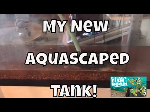 New Aquascaped Tank How To Clean Seachem Flourite Aquarium Fishroom VLOG
