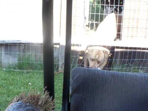 Dogs Break into yard