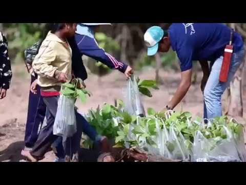 Roots - #Film4Climate Connect4Climate Special Award East Asia And Pacific Winner
