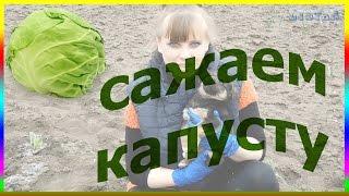 Как правильно посадить рассаду капусты. Капуста посадка уход выращивание капусты(Как правильно посадить рассаду капусты. Капуста посадка уход выращивание капусты. Подписывайтесь на мой..., 2016-04-10T20:51:19.000Z)