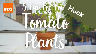 5 tips for your tomato plants