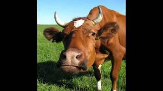 """The Cow"" (""Mu-Mu"").wmv"