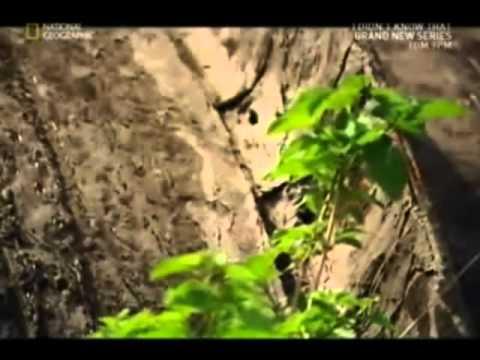 Bhopal Gas Leak Tragedy