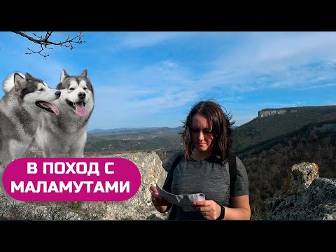 В ПОХОД С СОБАКАМИ / Алимова балка