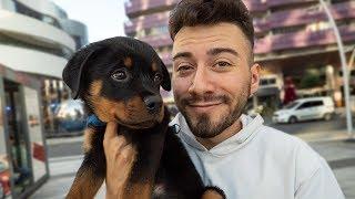 YENİ KÖPEĞİM ''ALFA''  🐶 (Dünyanın En Cesur Köpeği)
