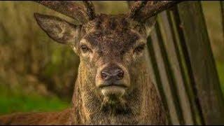 عبيد العوني في محمية القفاري البرية المجانية الجزء 2 Wildlife Free admission