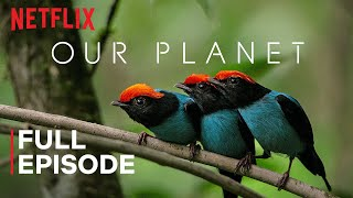 Download Our Planet | One Planet | FULL EPISODE | Netflix
