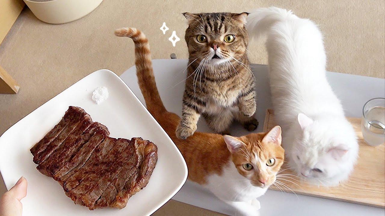 고양이들 앞에서 가장 비싼 스테이크를 먹어봤습니다!