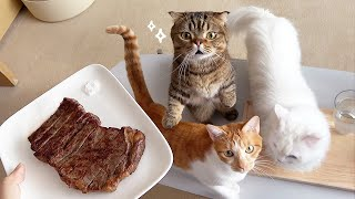 I Ate the Most Expensive Steak in Front of My Cats! (ENG SUB)