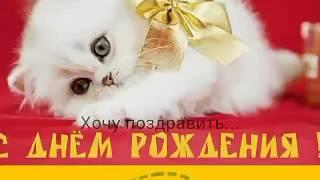 С днем рождения ми ми ми котята!!!