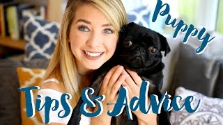 Getting A Puppy : Tips & Advice | Zoella