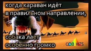 Собака лает караван идёт cobkits.ru