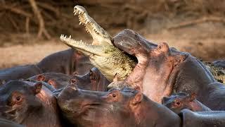 ТОП САМЫХ БОЛЬШИХ  5 животных обитающих в АФРИКЕ