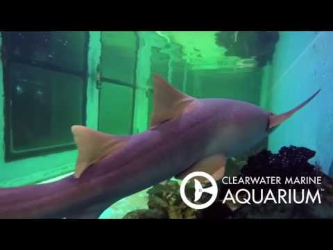 Shark Feeding with Dolphin Tale Stars  Cozi Zuehlsdorff & Austin Highsmith