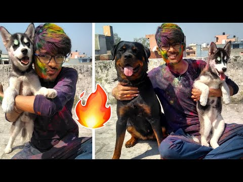 After Holi 🌈. Its bath time💦 || Dog Can talk part 21 || Dog Care Products. Rottweiler vs Husky ||
