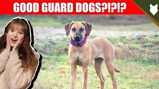 ARE RIDGEBACK GOOD GUARD DOGS?