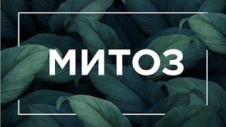 Митоз, интерфаза, жизненный цикл клетки | ЕГЭ Биология | Даниил Дарвин