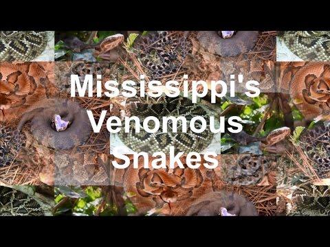 Mississippis Venomous Snakes YouTube - Poisonous snakes in mississippi