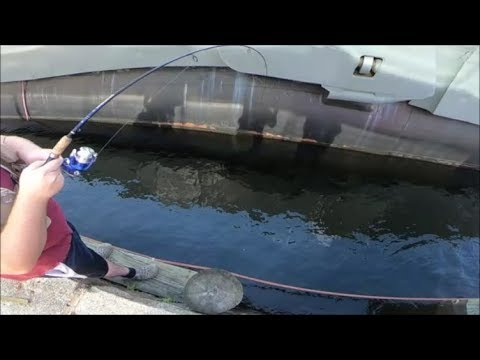 Fishing At The National Aquarium!? BIG FISH! Baltimore City Fishing Series Finale!